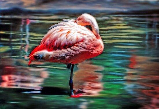 Flamingo  by venny