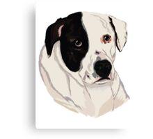 Bandit Pitbull Cross Rescue Canvas Print