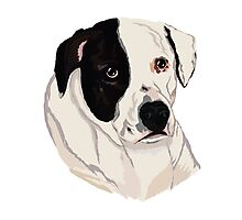 Bandit Pitbull Cross Rescue Photographic Print