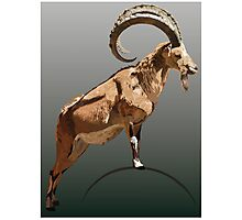 Ibex - Full Photographic Print