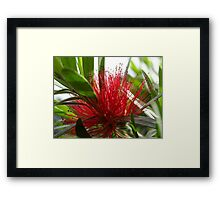 Glorious Bristles Framed Print
