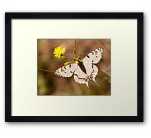 new born buttefly Framed Print