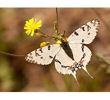 new born buttefly Photographic Print