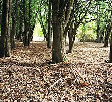 Hawthorn Woodland, Hagley, Tasmania by Alister A Mackinnon