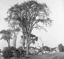 Rare American Elm Tree by Henri Bersoux