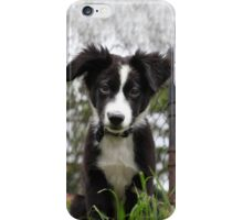 Border Collie Puppy iPhone Case/Skin