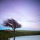 lonely tree by James Calvey