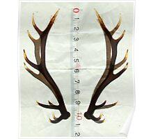 antlers measure Poster
