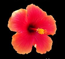 Hawaiian Greetings by Buckeyefiveo