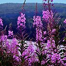 Fireweed (Hope After Fire) by Nancy Richard