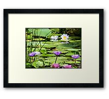 Pink, Purple and White Water Lilies Framed Print