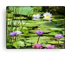 Pink, Purple and White Water Lilies Canvas Print
