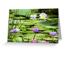Pink, Purple and White Water Lilies Greeting Card