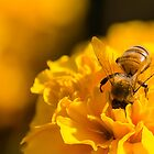 Head First Bee by NickVerburgt