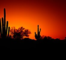 Saguaro Sunset by homendn
