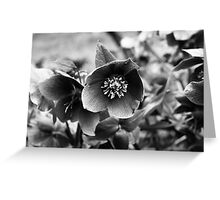 HELLEBORUS Greeting Card