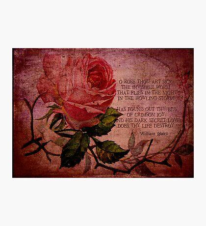 O Rose Thou Art Sick Photographic Print