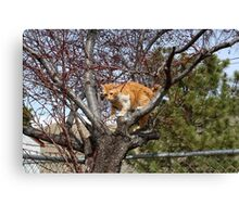 """Help, mom,dad I can't get down!!"" Canvas Print"