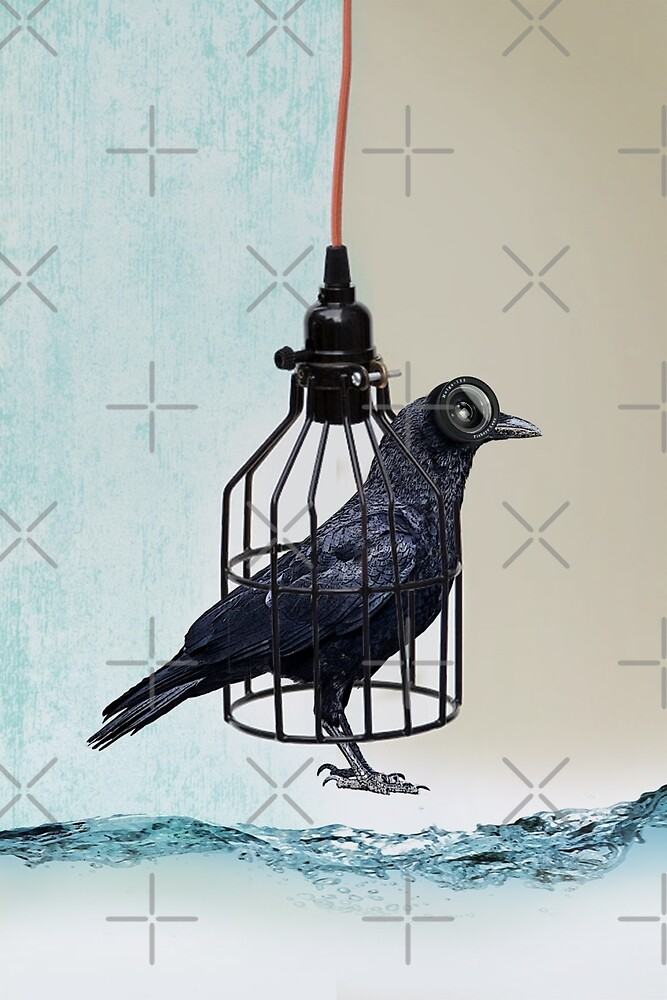 bird in the wire by Vin  Zzep