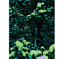 Branches III Photographic Print