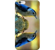Reflecting Pool Nuthatch  iPhone Case/Skin