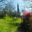 Tuscan Spring by modohunt