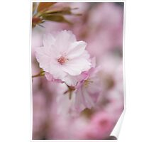 Spring blossom at the park Poster