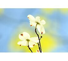 How Wonderful To See The New Colors Of SPRINGTIME!!!! Photographic Print