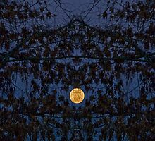 Mirrored Moon by Otto Danby II