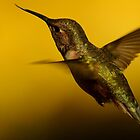 A HUMMINGBIRDS LIFE by RoseMarie747