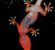 Red Lizzard by soulexperience