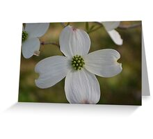 Flower from Dogwood Tree Greeting Card