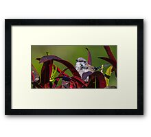 Fairy Wren On Lookout Framed Print