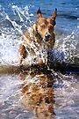Aqua Dog by Alex Preiss