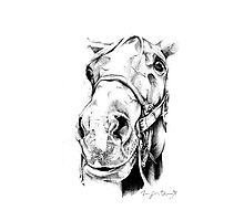 Horse Head Photographic Print