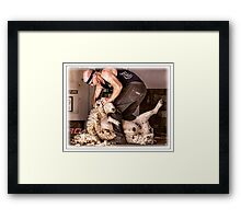 Sheep shearing Framed Print