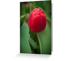 Deep Red Tulip Greeting Card