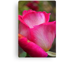 Drops of Pink Canvas Print