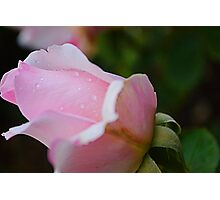 Kiss From A Rose Photographic Print