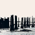 Old Piles - Solent Waters by delros