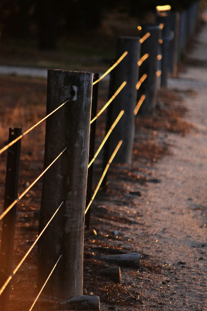 Fences Of Light by mayolover