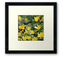 Dancing Buttercups Framed Print