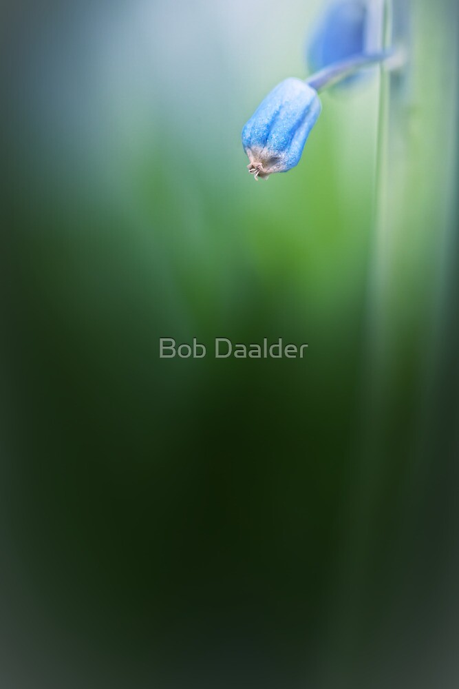 Take your time... by Bob Daalder