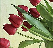 Red Tulips by rosannamz