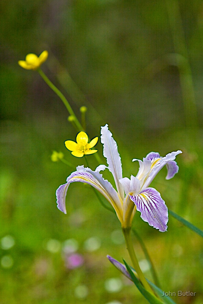 Bowl-Tube Iris and Buttercups by John Butler