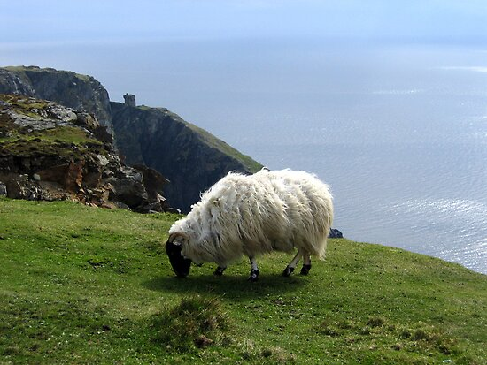 Ram Grazing on Slieve League, Ireland by Ludwig Wagner