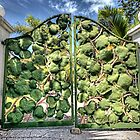 Sea grape at the front gate on Eastern Road in Nassau, The Bahamas by 242Digital