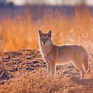 The Hunter by John  De Bord Photography