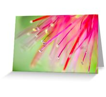 Bottlebrush Greeting Card