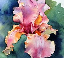 Afternoon Delight Iris by Ann Mortimer